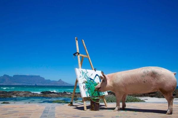 Pigcasso, de cerdita rescatada a artista famosa