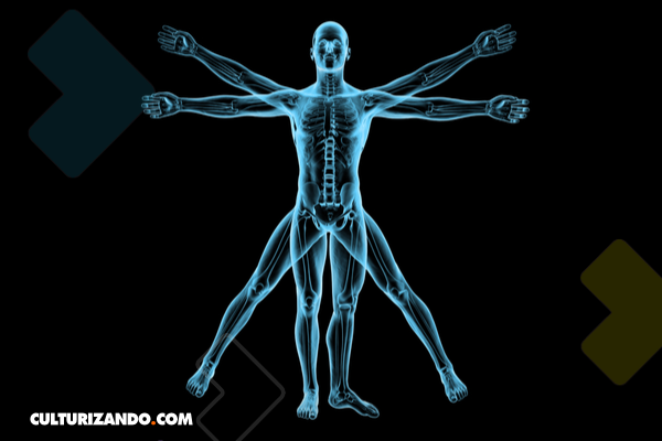 Trivia: Eres uno, pero, ¿qué tanto sabes del cuerpo humano?