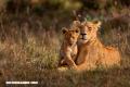 10 increíbles curiosidades de los mamíferos