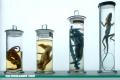 ¿Cómo lo escribes: espécimen o especimen?
