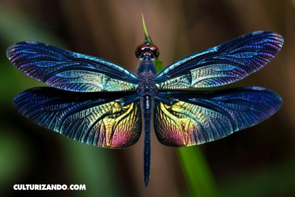 Una trivia escurridiza: Insectos y sus curiosidades