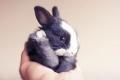 En Imágenes: 20 conejitos que alegrarán tu día
