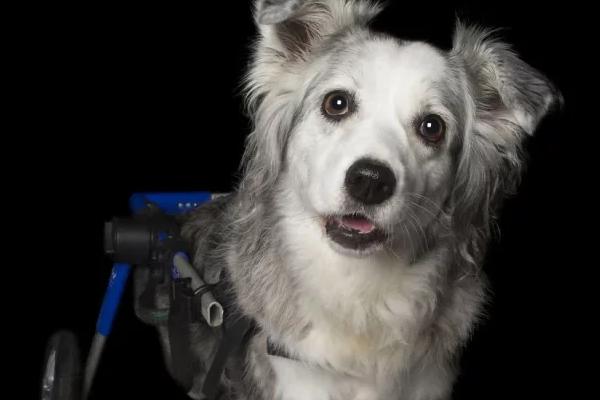 En Imágenes: 10 perros únicos y adorables