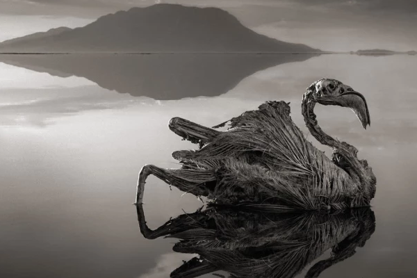 Natrón: el terrorífico lago que petrifica a los animales (+Imágenes)