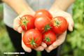 7 maravillosos beneficios de los tomates