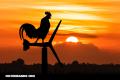 La Nota Curiosa: ¿Por qué cantan el gallo y otras aves al salir el sol?