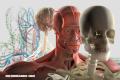 Trivia: ¿Cuánto sabes sobre anatomía?