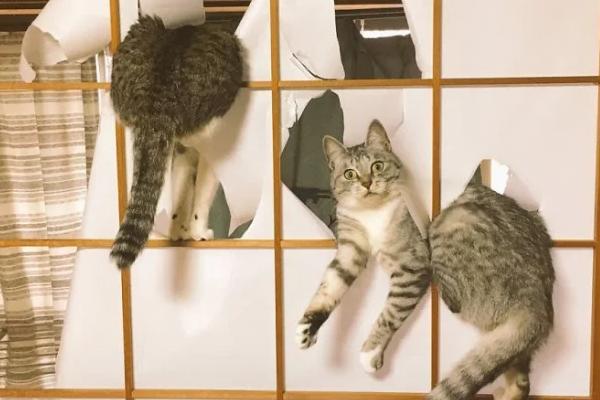20 imágenes que demuestran que los gatos pueden tener malas intenciones