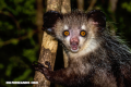 5 animales inofensivos que la gente teme