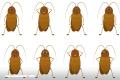 ¿Por qué una granja china produce 6000 millones de cucarachas anuales?