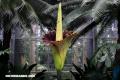 La flor cadáver, la planta con el peor olor del mundo