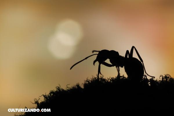 hormigas duermen