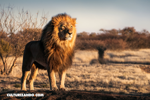 Trivia: ¿Qué tanto sabes de África?