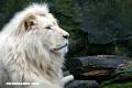 Los 5 animales más costosos del planeta