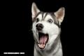 Un año de perro no equivale a 7 años humanos. ¡Conoce cómo envejecen!