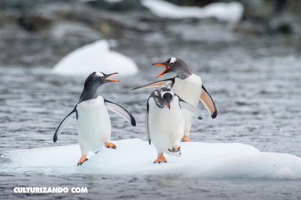 7 cosas que debes saber de la Antártida