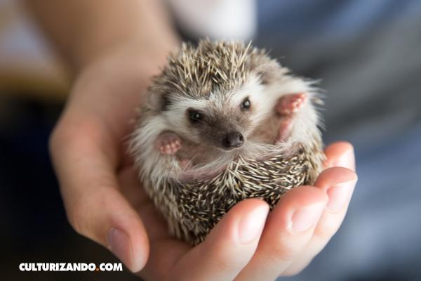 ¿'Animal lover'? ¡Demuéstralo en esta trivia sobre el mundo animal!