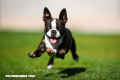 ¿Cuánto sabes de razas de perros?