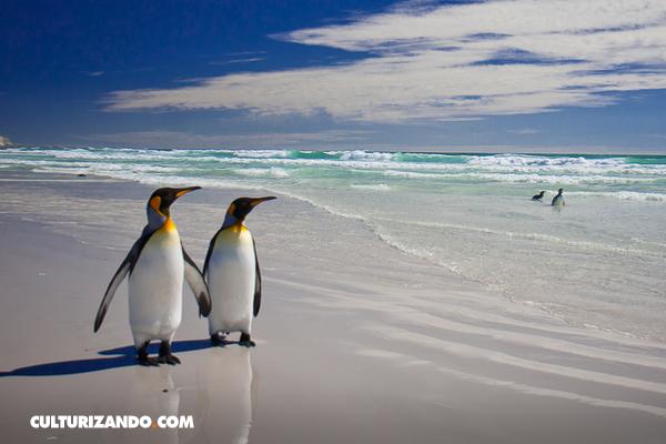 Curiosidades que no sabías de los pingüinos
