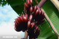 ¡Descubre las frutas más raras y extravagantes del mundo!