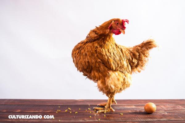 ¿Qué fue primero, el huevo o la gallina? Parece que ya existe la respuesta