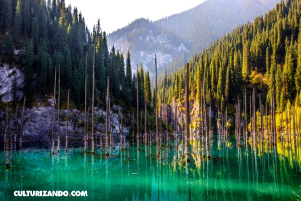 En Imágenes: El bosque submarino del lago Kaindy