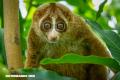 5 animales adorables que podrían matarte en minutos