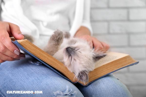 ¿Las personas con gatos podrían ser más inteligentes y emprendedoras que las que tienen perros?