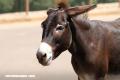 Trivia: ¿Podrías adivinar los progenitores de estos animales híbridos?