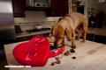 10 alimentos que los perros no deben consumir