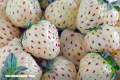 En Imágenes: Las frutas híbridas más curiosas