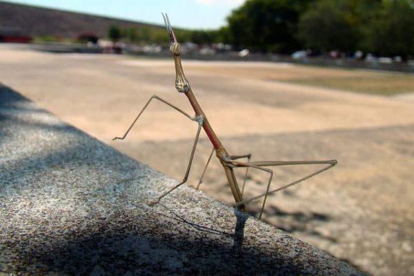 ¿Cuánto sabes sobre los insectos más raros del mundo?