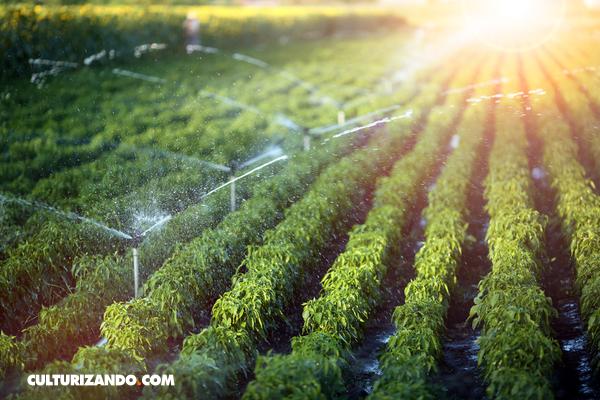 Cómo proteger el planeta transformando el sistema alimentario