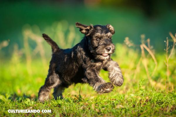 ¿Cuáles son las razas de perros más inteligentes?