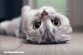 Las 10 razas de gatos más extrañas del mundo