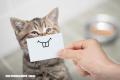 Trivia ¿Puedes identificar de qué raza de gatos se trata al ver solo una foto?
