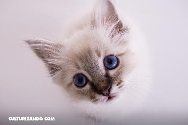 ¿Cómo es el lenguaje corporal de un gato?