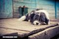 5 razones para adoptar un perro callejero