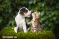 ¿Por qué los perros y los gatos se llevan mal?
