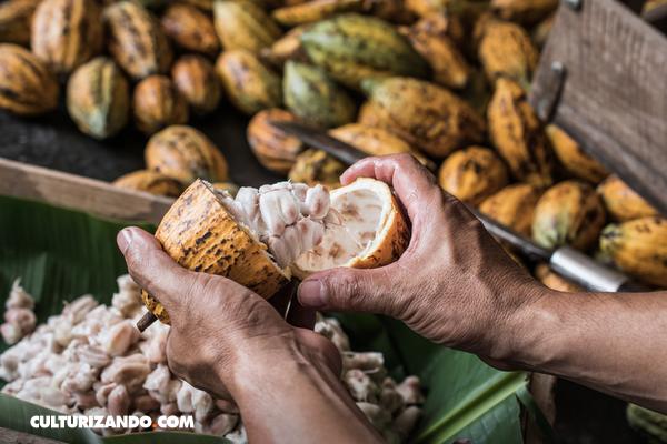 ¿Por qué el cacao venezolano es considerado el mejor del mundo?