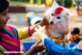Kukur Tihar: El festival hindú en honor a los perros