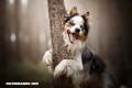 5 mitos sobre los perros que quizá no sabías