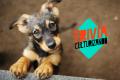¿Qué tanto sabes sobre perros? ¡Demuéstralo!