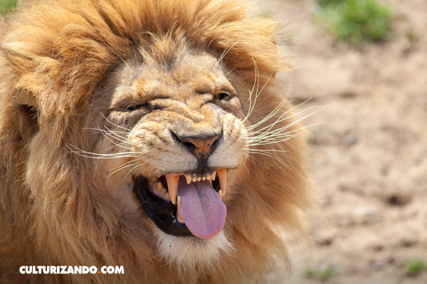 ¡Estas son las 10 fotos más graciosas de la vida salvaje!