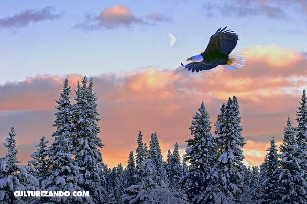 ¿Alguna vez te has preguntado cuál es el animal que vuela más rápido? Te lo tenemos…