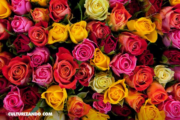 Conoce el significado de las rosas dependiendo de su color