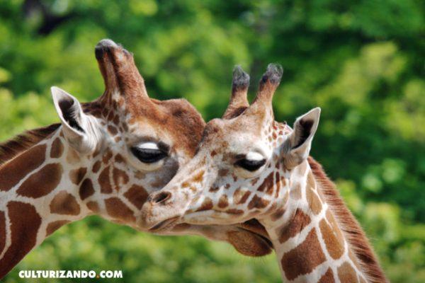El zoológico con más especies en el mundo queda en Berlín, ¿lo sabías? (+Imágenes)