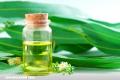 10 beneficios del eucalipto