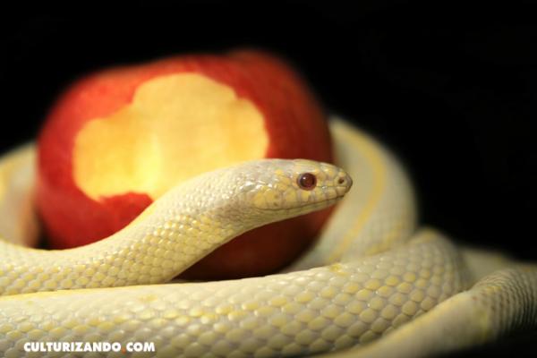 ¿Conoces el origen de la expresión «La manzana de la discordia»?