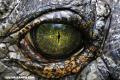 Teorías conspirativas: ¿Los reptilianos nos dominan?
